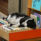 Afbeelding gebaseerd op female cat loves books van - (licentie: CC BY-SA 2.0)