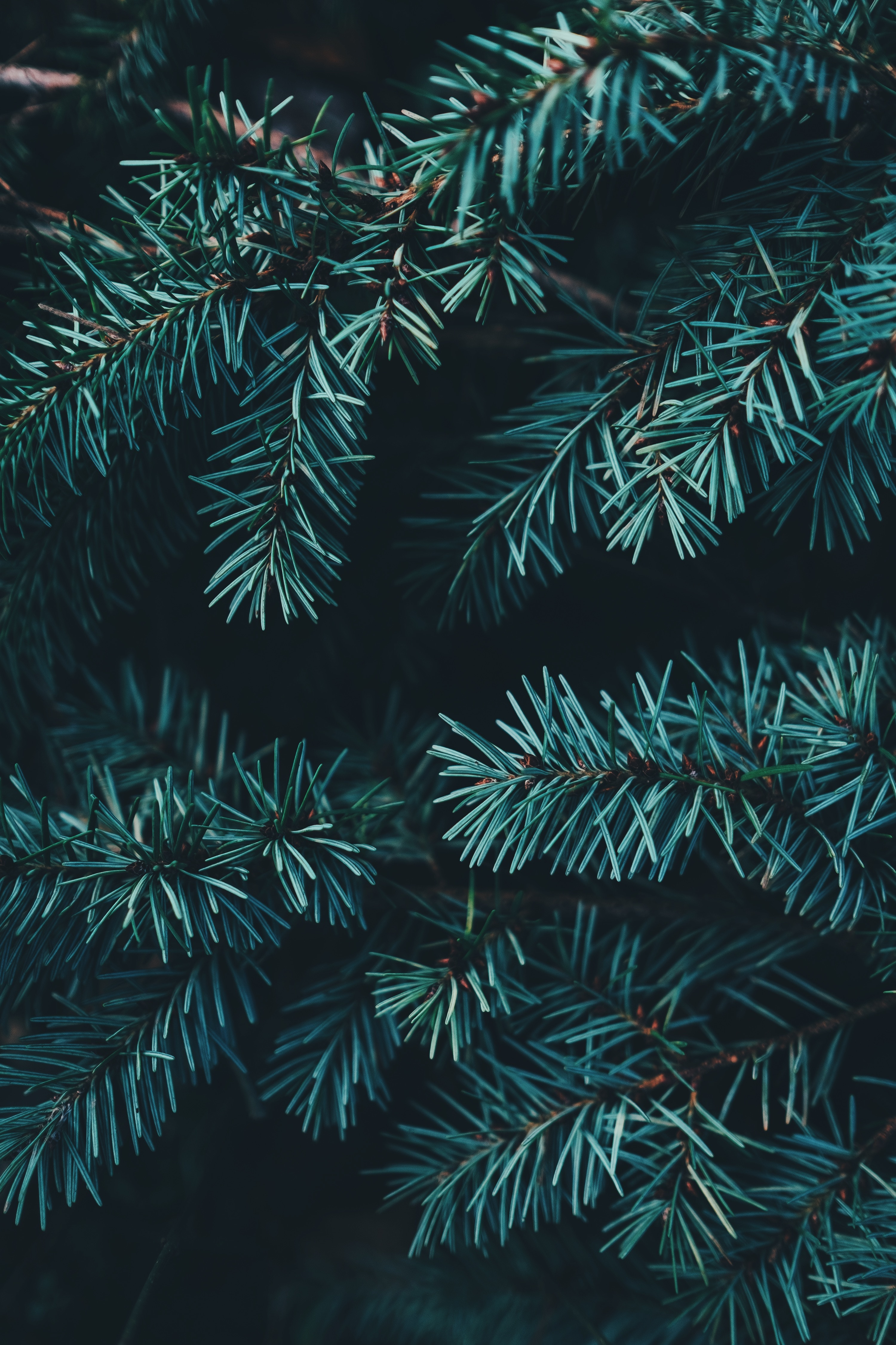 https://unsplash.com/photos/zh7GEuORbUw