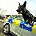 Afbeelding gebaseerd op It's a Dogs Life! van Defence Images (licentie: CC BY-NC-SA 2.0)