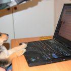 Afbeelding gebaseerd op On the internet nobody know you're a dog van Zvi Kons (licentie: CC BY-NC-SA 2.0)