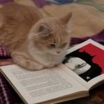 Afbeelding gebaseerd op Documentally Cat Book van Christian Payne (licentie: CC BY-NC-SA 2.0)