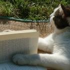Afbeelding gebaseerd op Reading Book Cat Literature van BibBornem (licentie: CC BY-NC-SA 2.0)